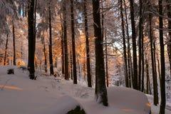 Романтичный заход солнца в древесине зимы Стоковые Изображения