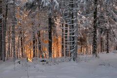 Романтичный заход солнца в древесине зимы Стоковое Изображение