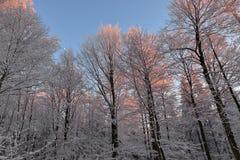 Романтичный заход солнца в древесине зимы Стоковые Фотографии RF