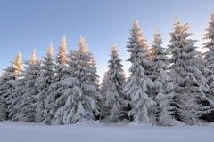 Романтичный заход солнца в древесине зимы Стоковое Фото