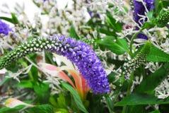 Романтичный красивый букет цветков Стоковое фото RF