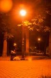 Романтичный парк ночи Стоковое Изображение