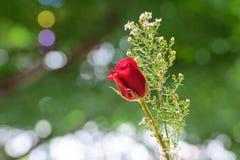 Романтичный подняло I Стоковое Фото