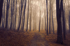 Романтичный элегантный лес во время туманного дня Стоковые Изображения