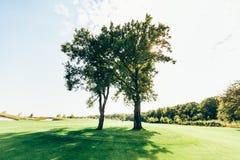 2 романтичных дерева на поле Стоковые Фото