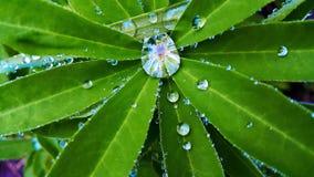 роса выходит дождь Стоковая Фотография RF