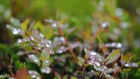 Роса в траве лета сток-видео