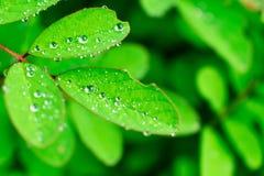 Роса и листья Стоковые Изображения