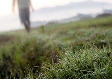 Роса и надежда утра Стоковое Изображение RF