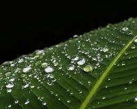 Роса крупного плана на зеленых лист Стоковые Фото