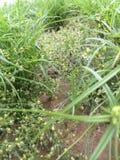 Роса на верхней части травы стоковые изображения rf