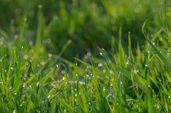 Роса на зеленой траве стоковые изображения