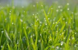 Роса на зеленой траве стоковые изображения rf