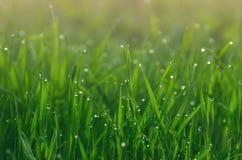 Роса на зеленой траве стоковая фотография rf