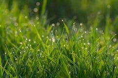 Роса на зеленой траве стоковое фото rf