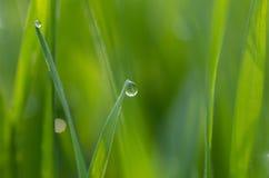 Роса на зеленой траве стоковые фотографии rf