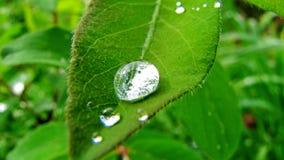 Роса на листе Стоковое фото RF