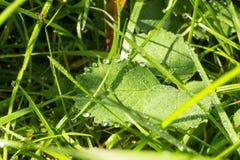 Роса на листе Стоковая Фотография RF