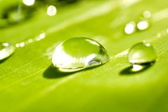 Роса на листьях зеленого цвета после дождя Стоковые Изображения RF