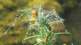 Роса на паутине Стоковое Изображение RF