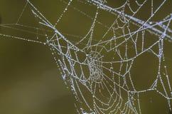 Роса на паутине Стоковые Изображения