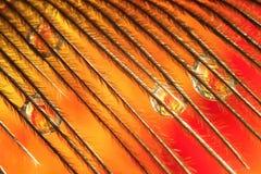 Роса на пере Стоковые Изображения
