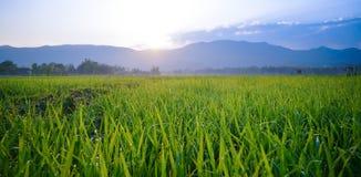 Роса на поле Стоковое фото RF