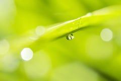 Роса на предпосылке солнечного света зеленой травы Стоковое фото RF