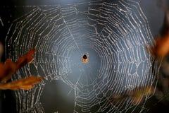 Роса на сети паука в лесе стоковая фотография