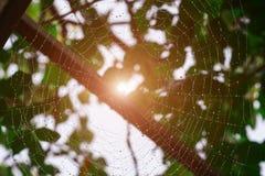 Роса на сети паука Стоковое Изображение