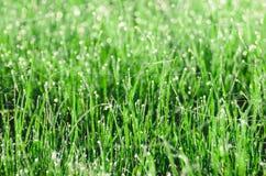 Роса на траве с spiderweb Красивым предпосылка запачканная природным источником Утро в траве Стоковые Изображения RF