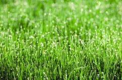 Роса на траве с spiderweb Красивым предпосылка запачканная природным источником Утро в траве Стоковая Фотография