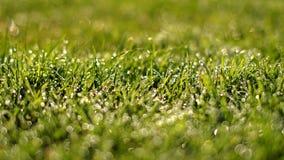 Роса на траве Стоковая Фотография RF
