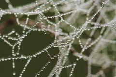 Роса на Spiderweb Стоковое Изображение