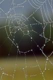 Роса покрыла сеть паука Стоковые Изображения