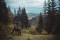 Роса тумана утра выгона лошади Стоковое Фото