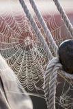 Роса утра на детали парусника Spiderweb Стоковое фото RF