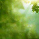 Роса утра на листве лета стоковые фотографии rf