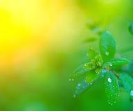 Роса утра на листьях стоковые фото