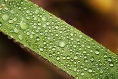 Роса утра на листьях стоковая фотография rf