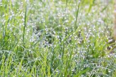 Роса утра на поле травы Стоковое Изображение RF