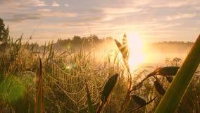 Роса утра на сети паука против предпосылки захода солнца сток-видео