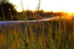 Роса утра на траве Стоковая Фотография