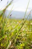 Роса утра на траве Стоковые Изображения RF