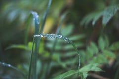 Роса утра на травинке стоковые изображения rf
