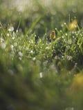 Роса утра на цветках луга Стоковая Фотография RF