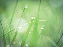 Роса утра свежая в траве стоковое изображение