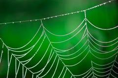 Роса утра. Светя падения воды на spiderweb стоковое фото
