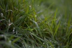 Роса утра с зеленой травой стоковая фотография rf