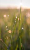 Роса утра Стоковая Фотография RF